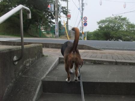 20120718夕方の散歩04
