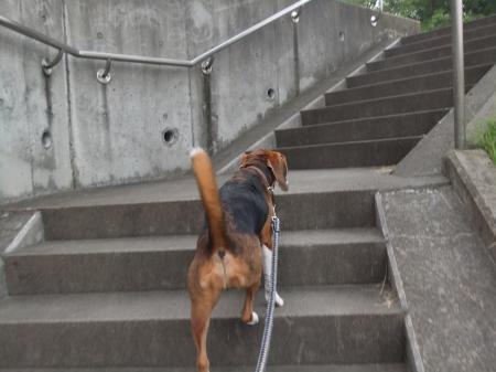 20120718夕方の散歩03