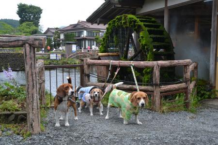 20120720忍野八海08