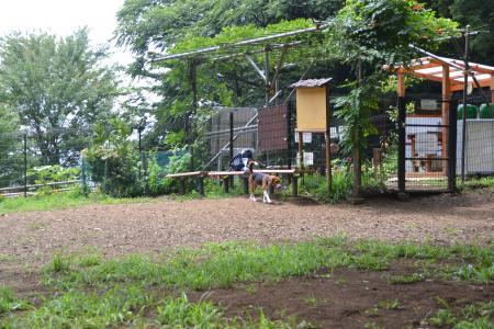 \20120724小山内裏公園04