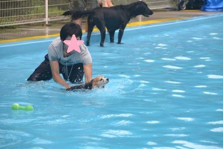 20120812ひぬまドッグラン プール編17