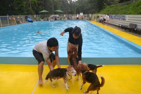20120812ひぬまドッグラン プール編21