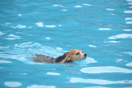 20120812ひぬまドッグラン プール編20