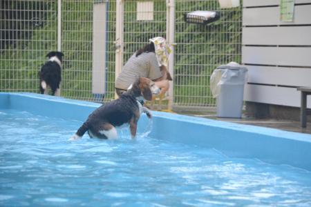 20120812ひぬまドッグラン プール編30