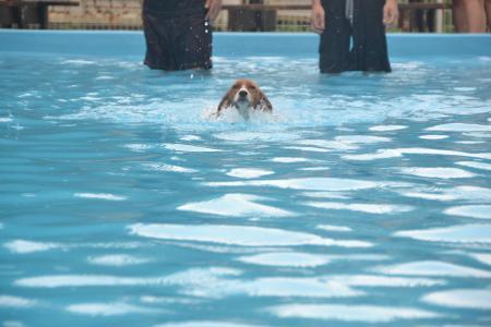 20120812ひぬまドッグラン プール編28