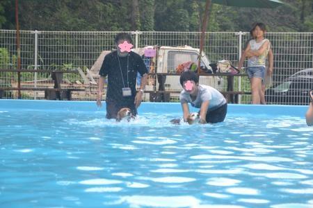 20120812ひぬまドッグラン プール編25