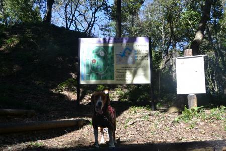 20121001野鳥の森08