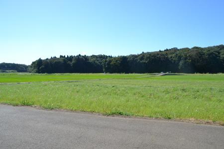 20121001野鳥の森22