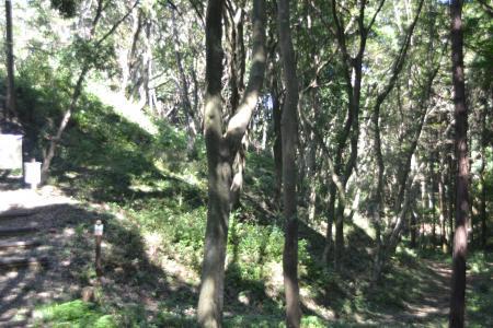 20121001野鳥の森19