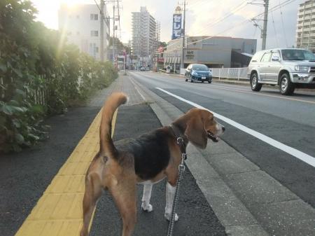 20121006散歩05