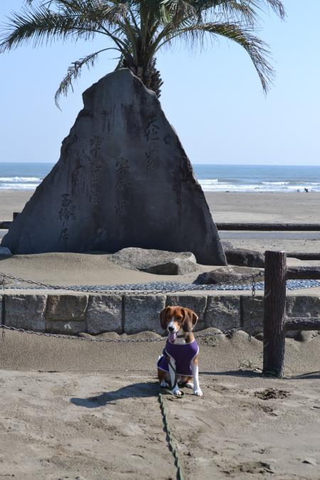 20121021本須賀海岸04