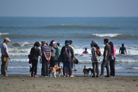 20121021本須賀海岸13