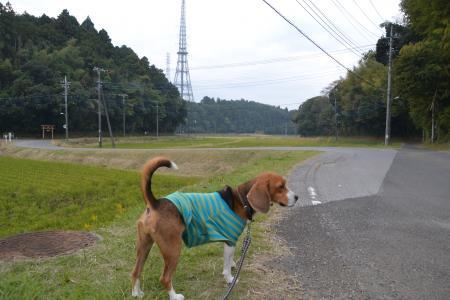 20121105江弁須城址14