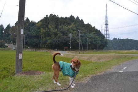 20121105江弁須城址15