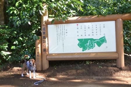 20121108成東城址02