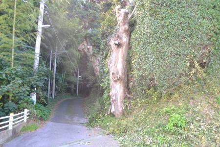 20121108松尾城址07