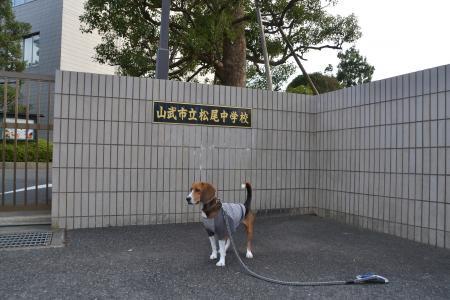 20121108松尾城址17