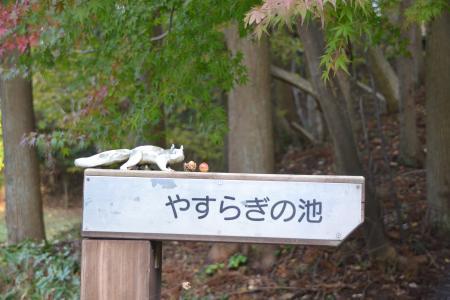 20121108さんぶの森公園06