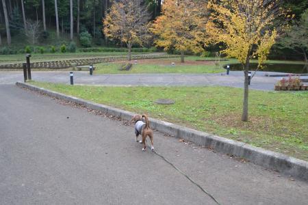 20121108さんぶの森公園05