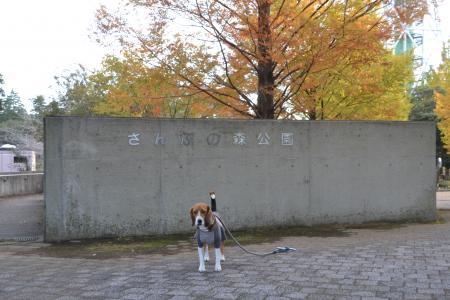 20121108さんぶの森公園01