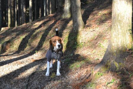 20121108さんぶの森公園11