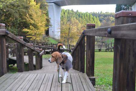 20121108さんぶの森公園07