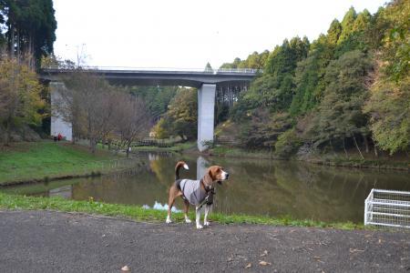 20121108さんぶの森公園13