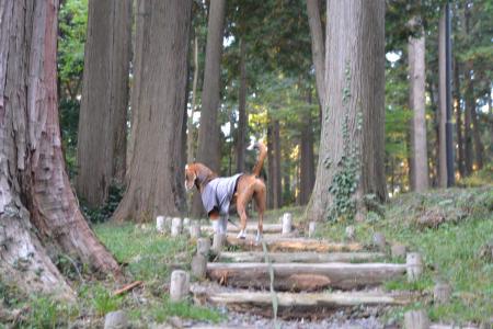 20121108さんぶの森公園14