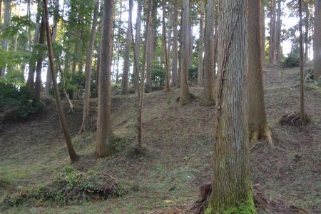 20121108さんぶの森公園19