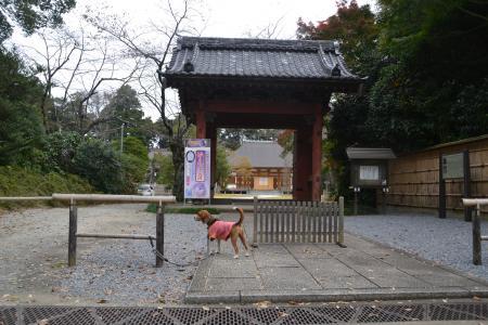 20121111栄福寺館02