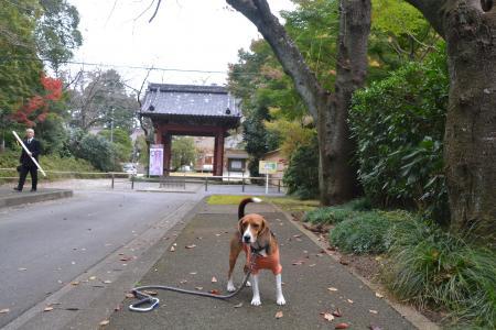 20121111栄福寺館15