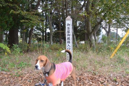 20121111御茶屋御殿01