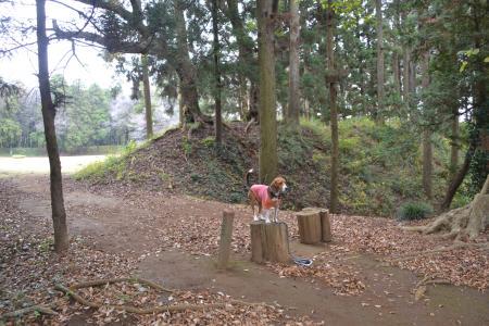 20121111御茶屋御殿12