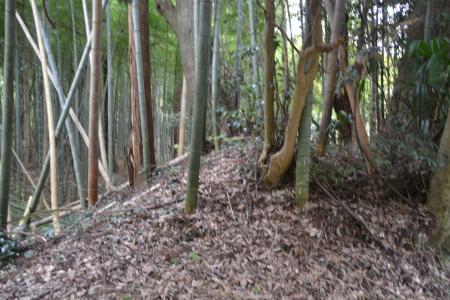 20121111中野城址06