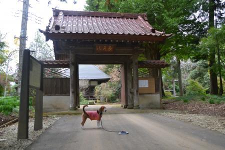 20121111中野城址02