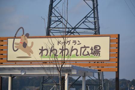 20121119カインズドッグラン03
