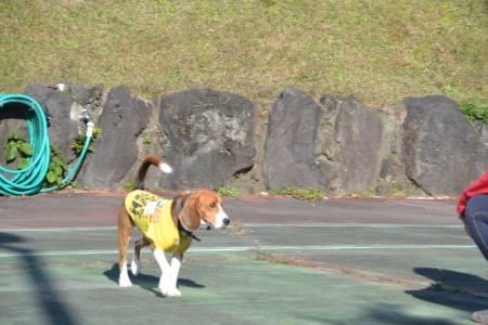 20121121伊豆旅行13