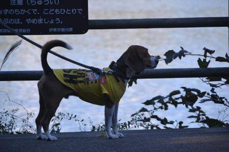 20121121伊豆旅行27