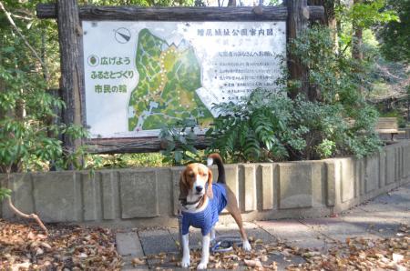 20121207増尾城址14