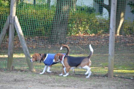 20121207柏の葉公園ドッグラン05
