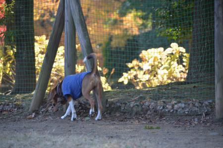 20121207柏の葉公園ドッグラン03