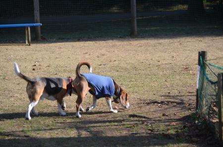20121207柏の葉公園ドッグラン02