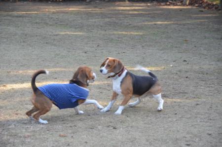 20121207柏の葉公園ドッグラン12