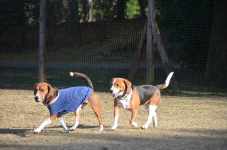 20121207柏の葉公園ドッグラン09