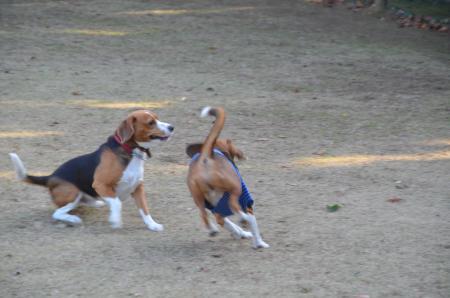 20121207柏の葉公園ドッグラン11