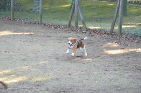 20121207柏の葉公園ドッグラン18