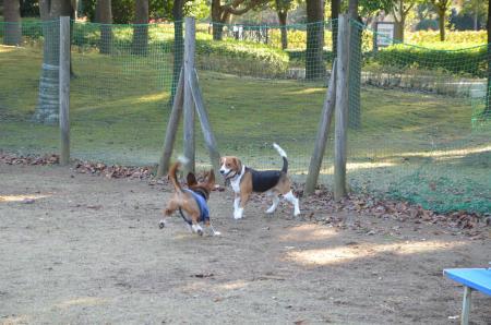 20121207柏の葉公園ドッグラン16
