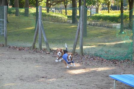 20121207柏の葉公園ドッグラン17