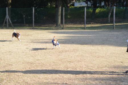 20121207柏の葉公園ドッグラン21