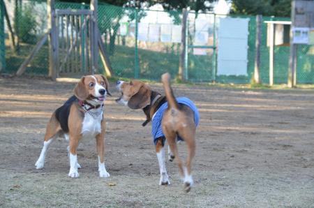 20121207柏の葉公園ドッグラン22